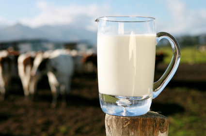 Why Humans Should not Drink Cow's Milk